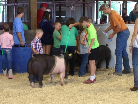 pee wee swine showmanship